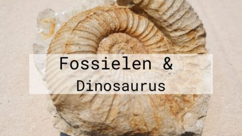 Fossielen en Dinosaurus